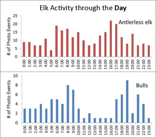 ElkActivity_Day