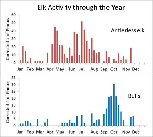 ElkActivity_Year