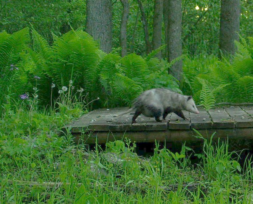 Opossum_Pouch_SSWI000000005222548A