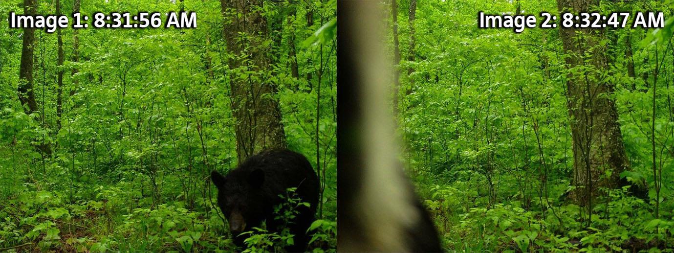 bear_photo