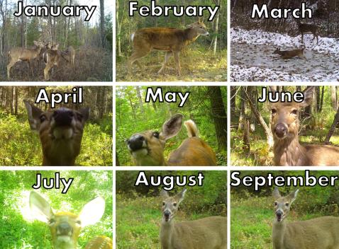 Deer Calendar Meme
