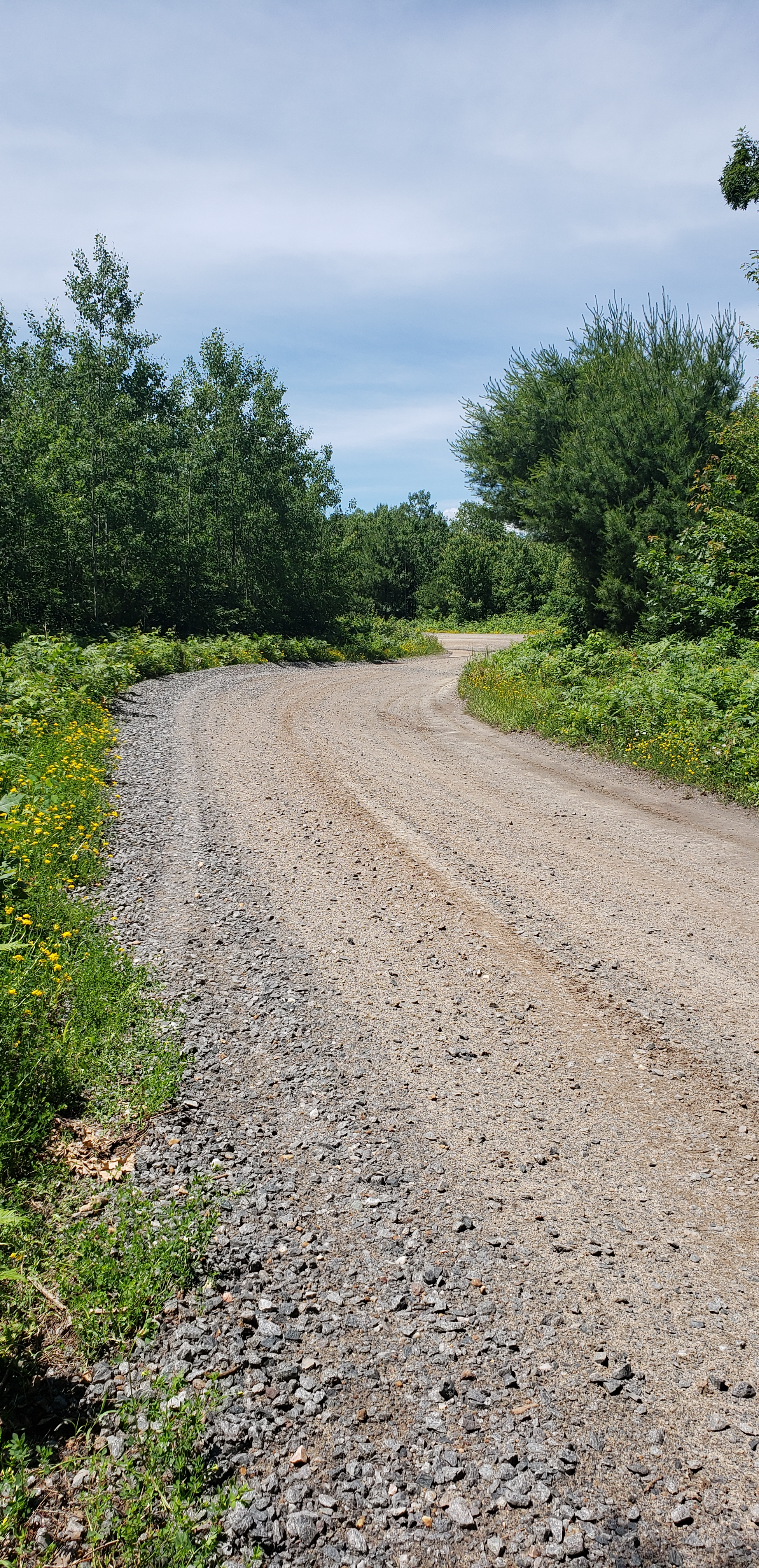 A gravel road and trees