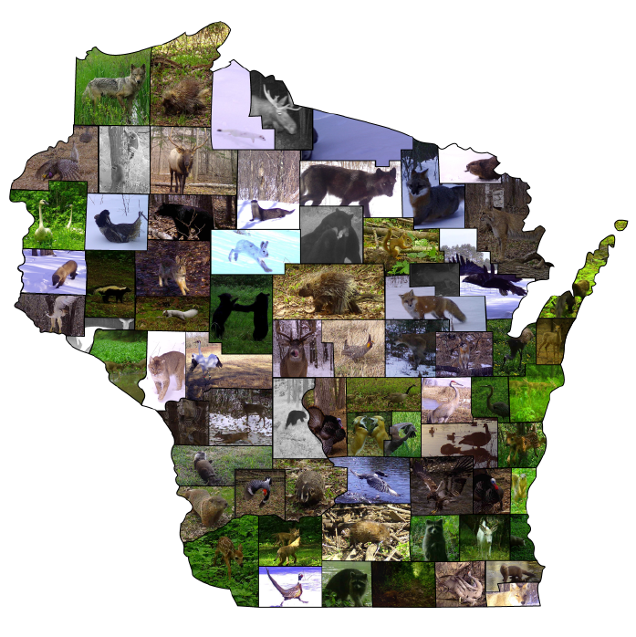A collage of wildlife photos in the shape of Wisconsin